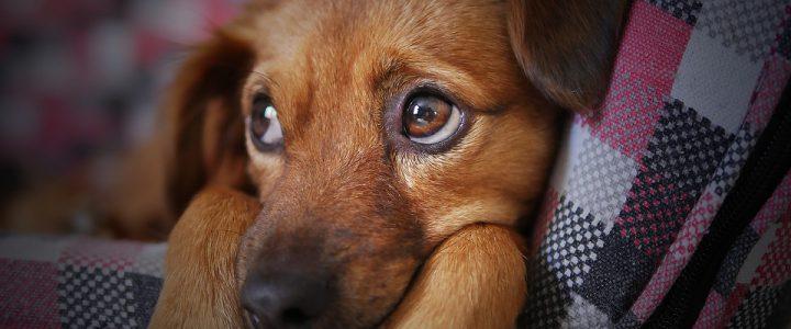 Hondenmand: je huisdier comfortabel op kantoor